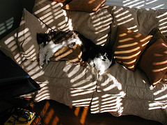 sunny couch